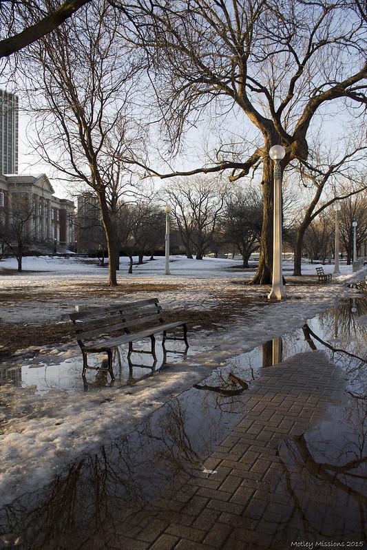park tree refleciton