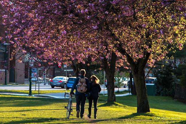Blossom Buddies ~ Vancouver, BC