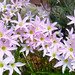 Happy lilies! (They emerged after a light rain) by ltimothy on/off