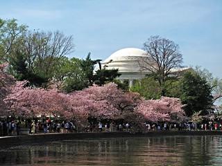 Cherry Blossom time ~ HCS!