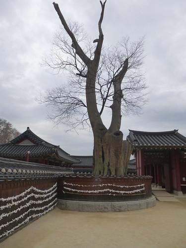 Co-Suwon-Forteresse (192)