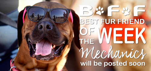 Does your furkid have what it takes to be AKCUPI's Best Fur Friend of the year?