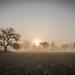Field of Mist