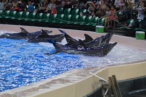 Dolphin performance at Zhuhai Ocean Kingdom