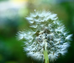 Natures Magic
