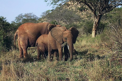 Wonderful Kenya
