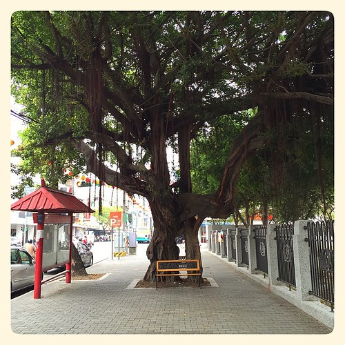 An impressive tree in Caotun. #caotun #nantou #taiwan #tree #台灣 南投 #草屯