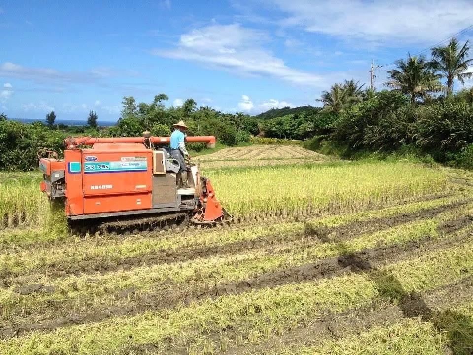 過去稻田收割的景象