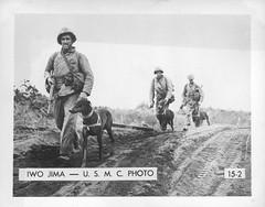 War Dogs on Iwo Jima, 1945