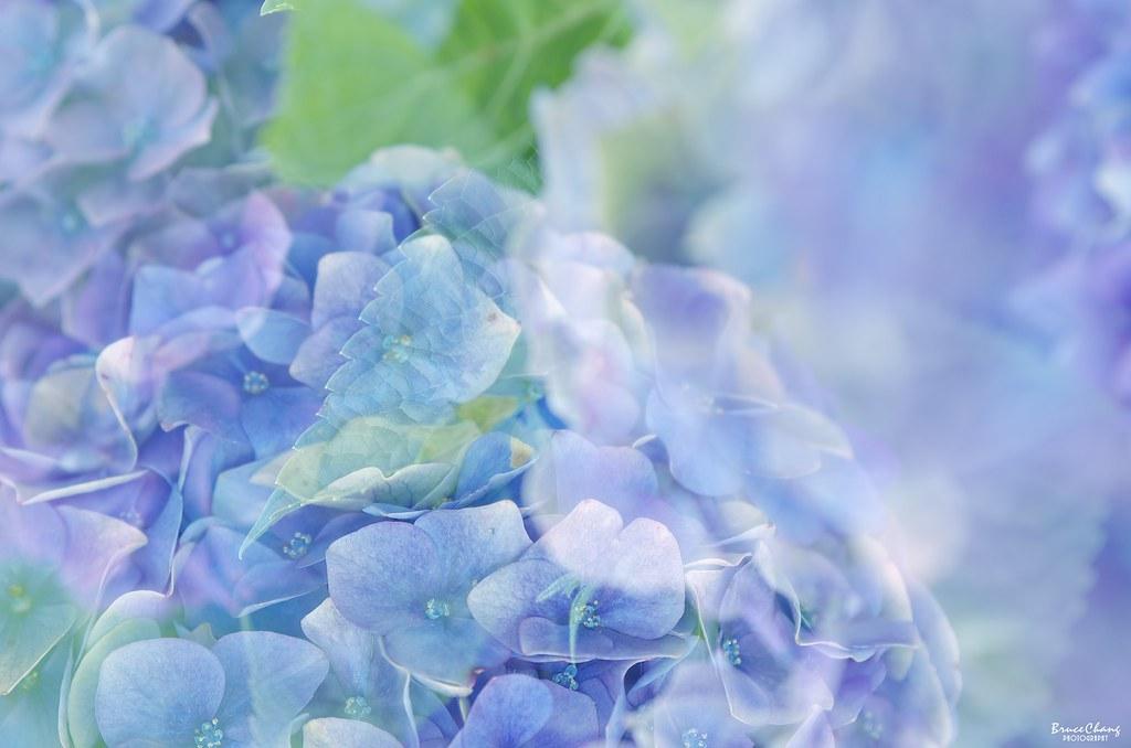 ---初見,聽見,紫陽---
