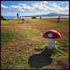@dezant_photo navigates the SuperMario-scape at the top of Mt. Victoria Reserve trying to save his princess. :mushroom::princess::mushroom: