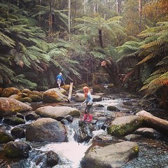 #latergram #temperaterainforest #ferntrees #waterfall #tooronga #steppingstones #gummistøvler #gingerhair
