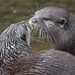 Otters-6277 by Photography By Robert Young
