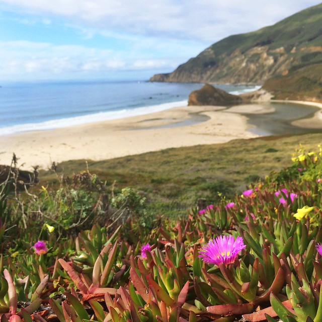 Spring in Big Sur