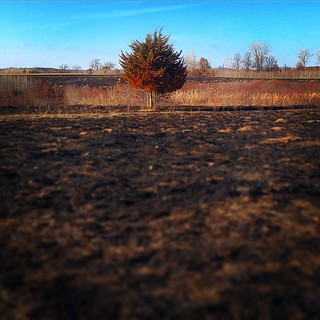 Perscribed burn at the Sherburne NWR. Soon, this will be covered in Wild Lupine....  #SherburneNationalWildlifeRefuge #Zimmerman #MN #Minnesota #ChristopherJFranklinPhotography #BigLake