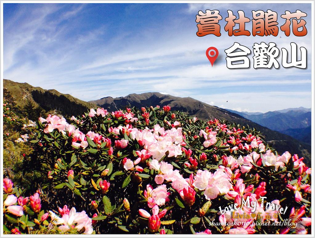 合歡山杜鵑花 - 01