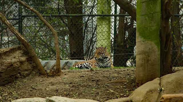 27018440305 64b3be2122 z Chattanooga Zoo