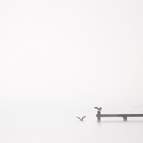 ロトルア湖の桟橋 #airnzjp #link_nz