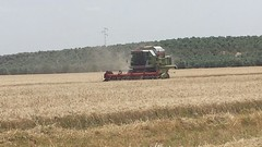prairie, agriculture, field, wheat, event, plant, harvest, crop, harvester,