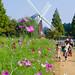 公園の休日 - Families enjoy a field of flowers -