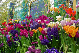 Smith College 2015 Spring Bulb Show