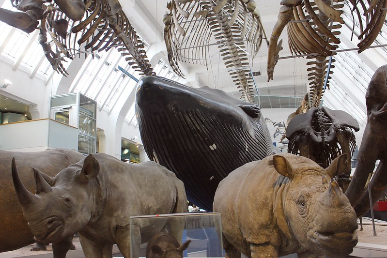 Natural History Museum 2015