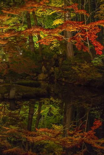 autumn reflection tree fall japan temple kyoto nightshot autumnleaves 京都 日本 紅葉 秋 木 夜景 寺 京都市 京都府 反射