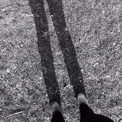 langebenen