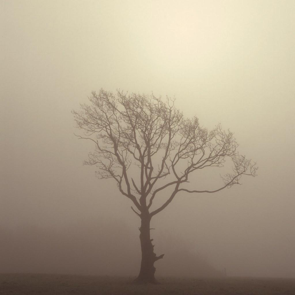 Treemist