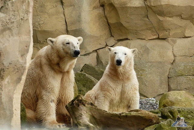 Zoo am Meer 07.03.2015   182