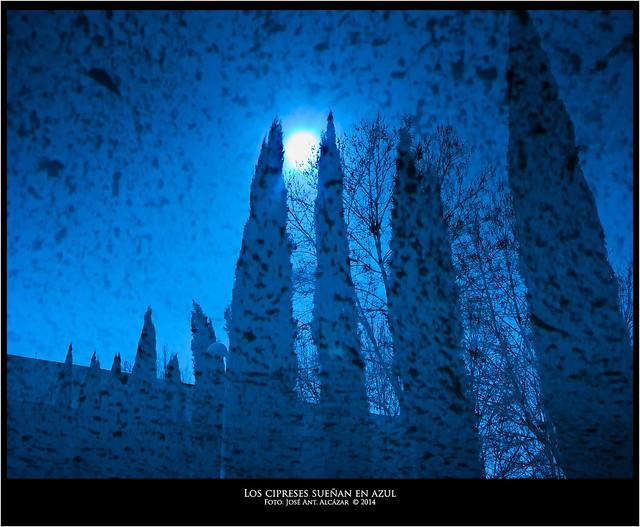 los cipreses sueñan en azul  DSCN4470_1