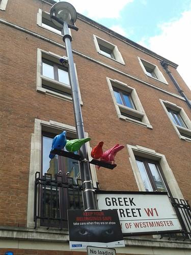 Greek Street Pigeons