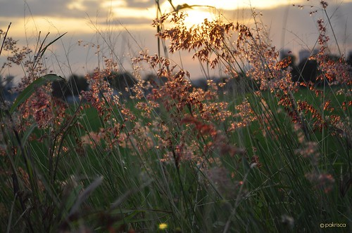 sunset nature grass glow