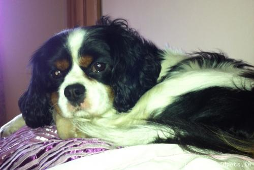 Thu, Mar 19th, 2015 Lost Male Dog - The Local Area, Lisnagry Murroe, Limerick