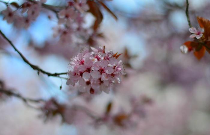 norain, wildflower girl, fashion, fashion blog, coccinelle, benetton (3)