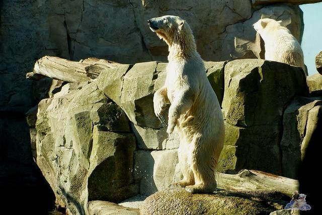 Zoo am Meer 08.03.2015  169