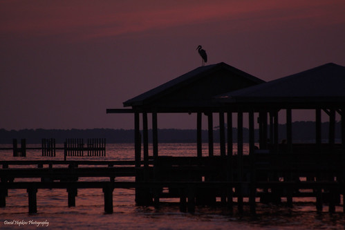 sunset heron water pier al twilight alabama gulfshores davidhopkinsphotography