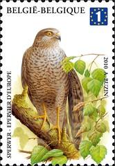 12 BUZIN 25 timbrec