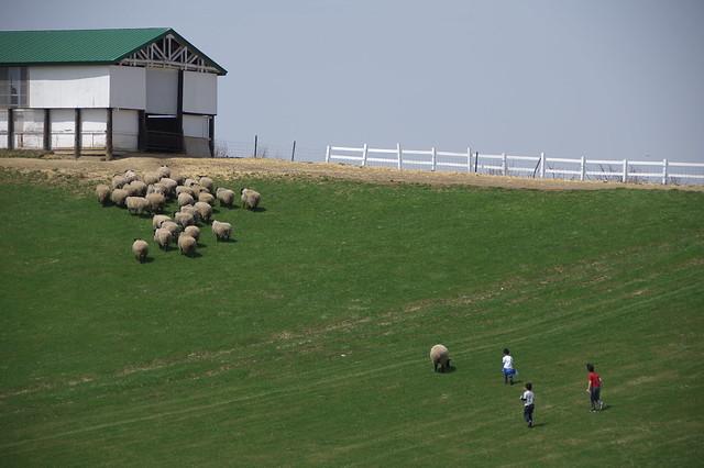 20160503羊と雲の丘_27