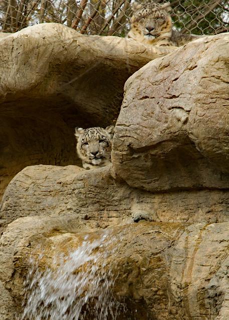 27018424945 e67d77012a z Chattanooga Zoo