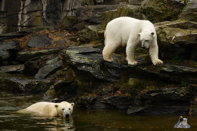 Tierpark Berlin 21.03.2015  115