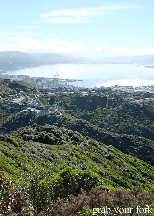 View of Wellington from the hill