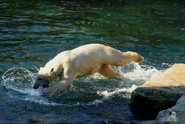 Zoo am Meer 08.03.2015  67