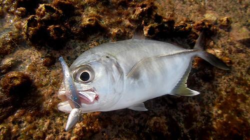 今日のサムイ島 3月16日 釣り開幕戦2015-マトラン