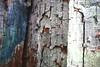 Painted bark