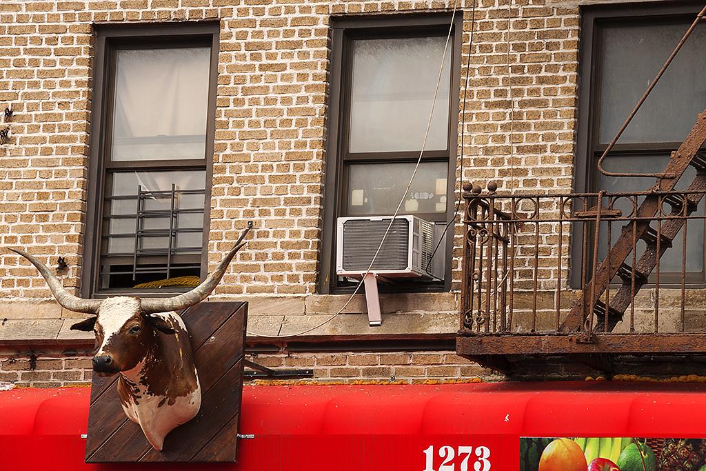 Bull's head--Washington Heights