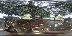 Confusing signs on the west bank of the Ala Wai Canal -a 360° Equirectangular VR