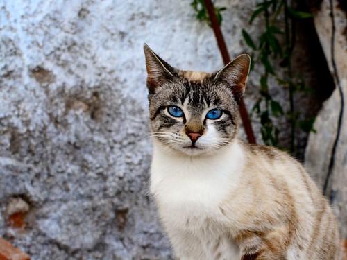 gato-9
