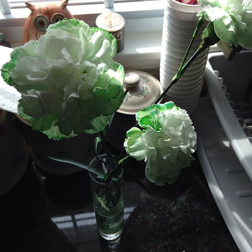 🍀🍀Green carnations for St. Patrick's Day. Today is my husbands favorite holiday so we make it extra special! 🍀🍀