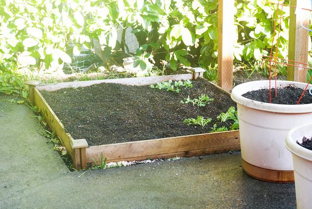 gardenbedplanted4